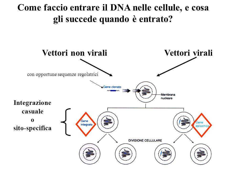 Come faccio entrare il DNA nelle cellule, e cosa gli succede quando è entrato
