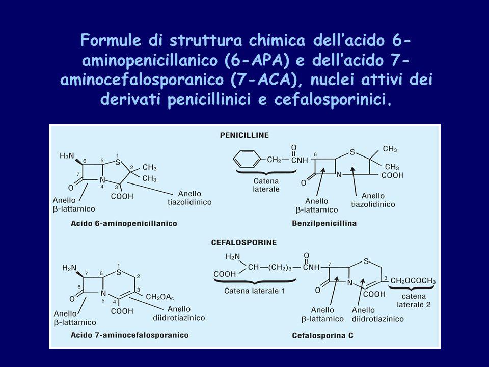 Formule di struttura chimica dell'acido 6-aminopenicillanico (6-APA) e dell'acido 7-aminocefalosporanico (7-ACA), nuclei attivi dei derivati penicillinici e cefalosporinici.