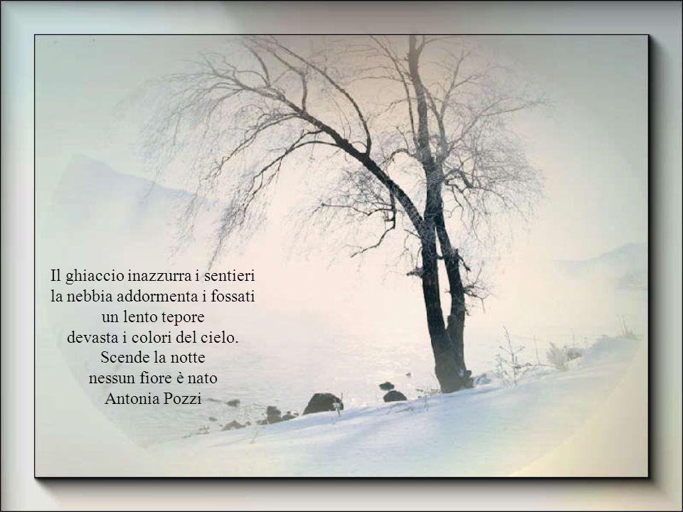 Il ghiaccio inazzurra i sentieri la nebbia addormenta i fossati
