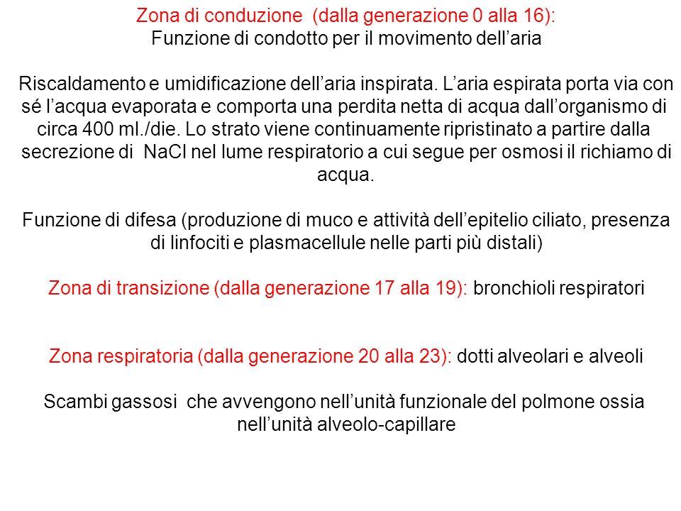 Zona di conduzione (dalla generazione 0 alla 16):
