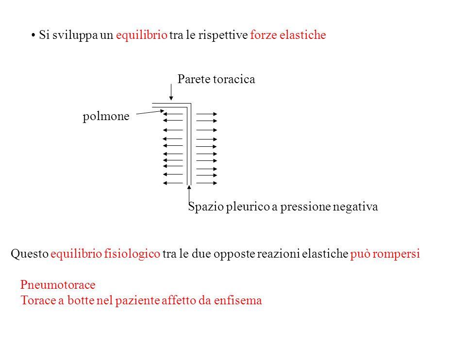 Si sviluppa un equilibrio tra le rispettive forze elastiche