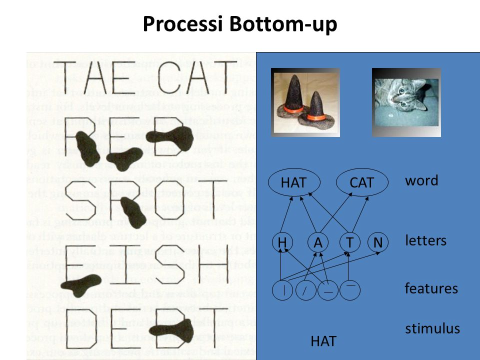 Processi Bottom-up HAT HAT CAT word letters H A T N features stimulus