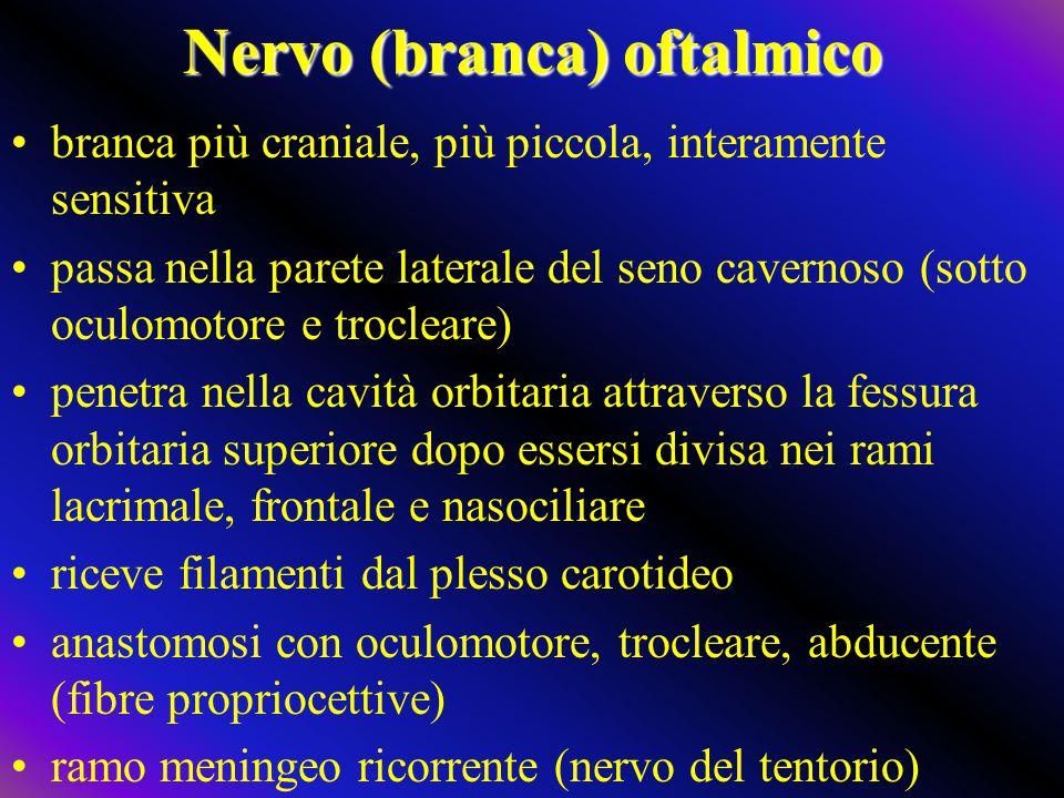 Nervo (branca) oftalmico