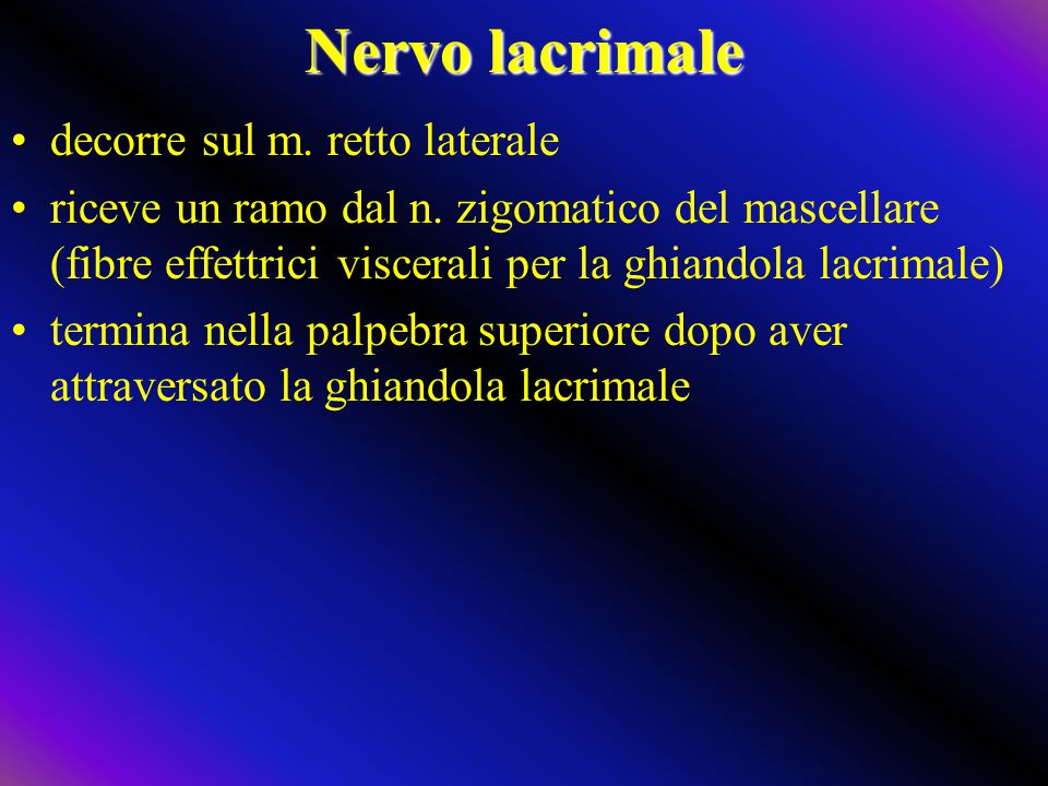 Nervo lacrimale decorre sul m. retto laterale