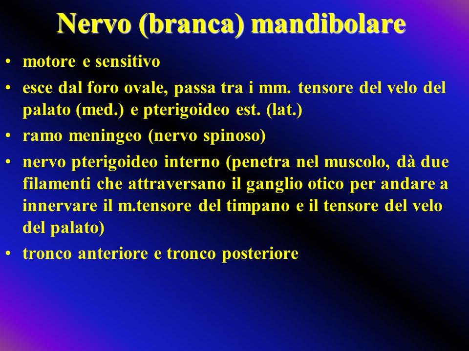 Nervo (branca) mandibolare