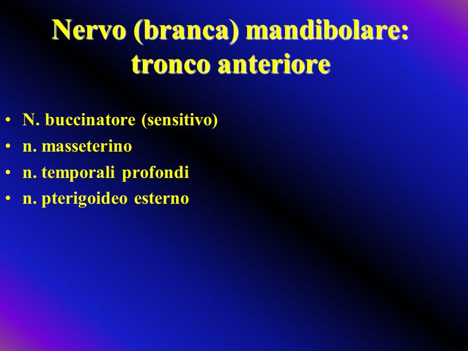 Nervo (branca) mandibolare: tronco anteriore