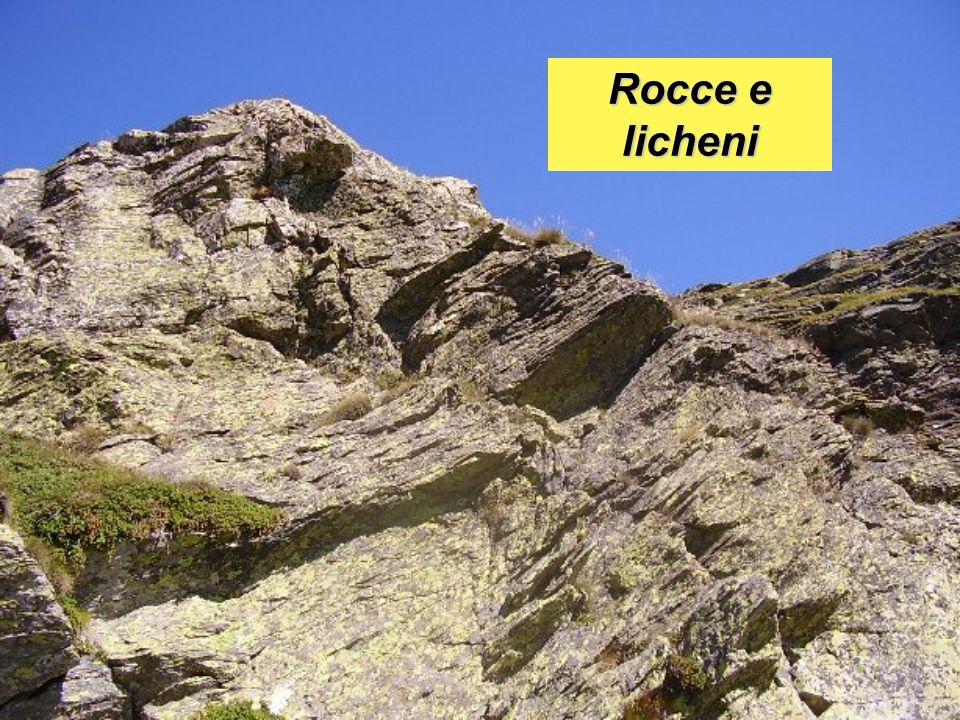 Rocce e licheni
