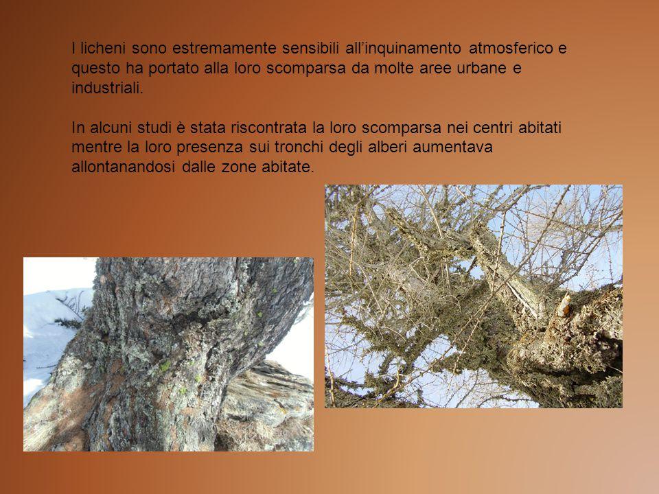 I licheni sono estremamente sensibili all'inquinamento atmosferico e questo ha portato alla loro scomparsa da molte aree urbane e industriali.