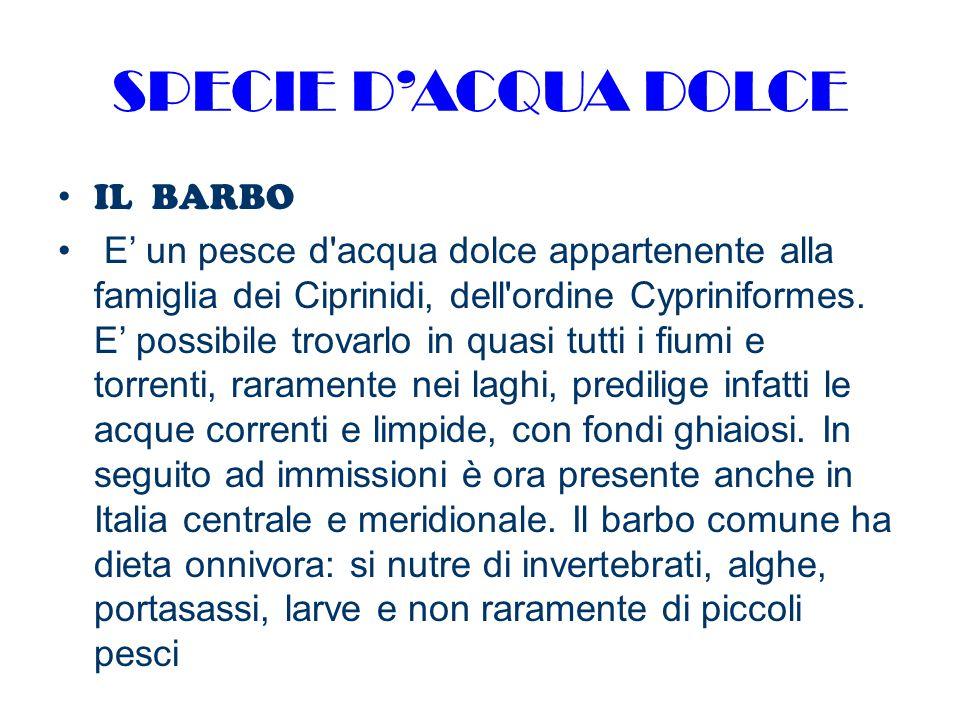 SPECIE D'ACQUA DOLCE IL BARBO