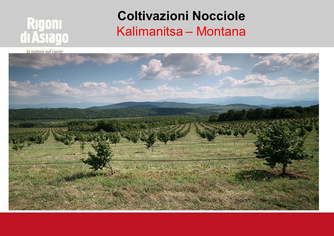 Coltivazioni Nocciole Kalimanitsa – Montana