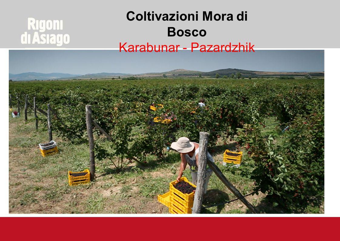 Coltivazioni Mora di Bosco Karabunar - Pazardzhik