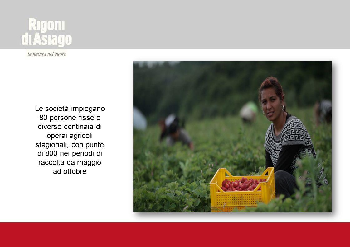 Le società impiegano 80 persone fisse e diverse centinaia di operai agricoli stagionali, con punte di 800 nei periodi di raccolta da maggio ad ottobre