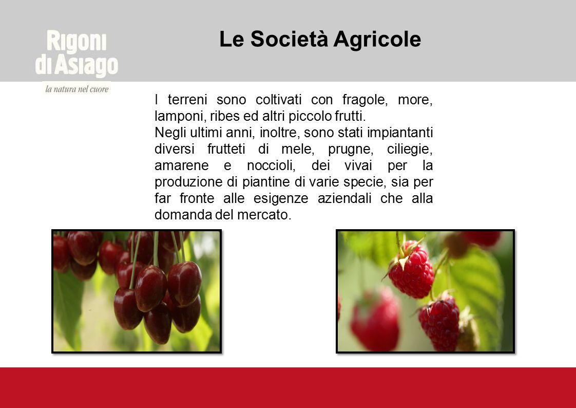Le Società Agricole I terreni sono coltivati con fragole, more, lamponi, ribes ed altri piccolo frutti.