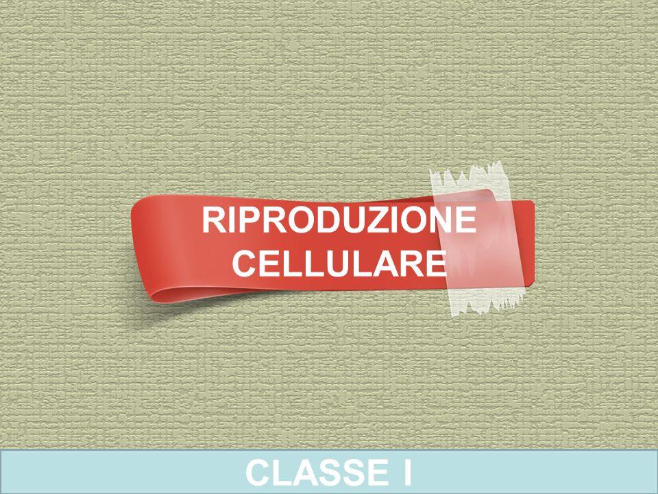 RIPRODUZIONE CELLULARE