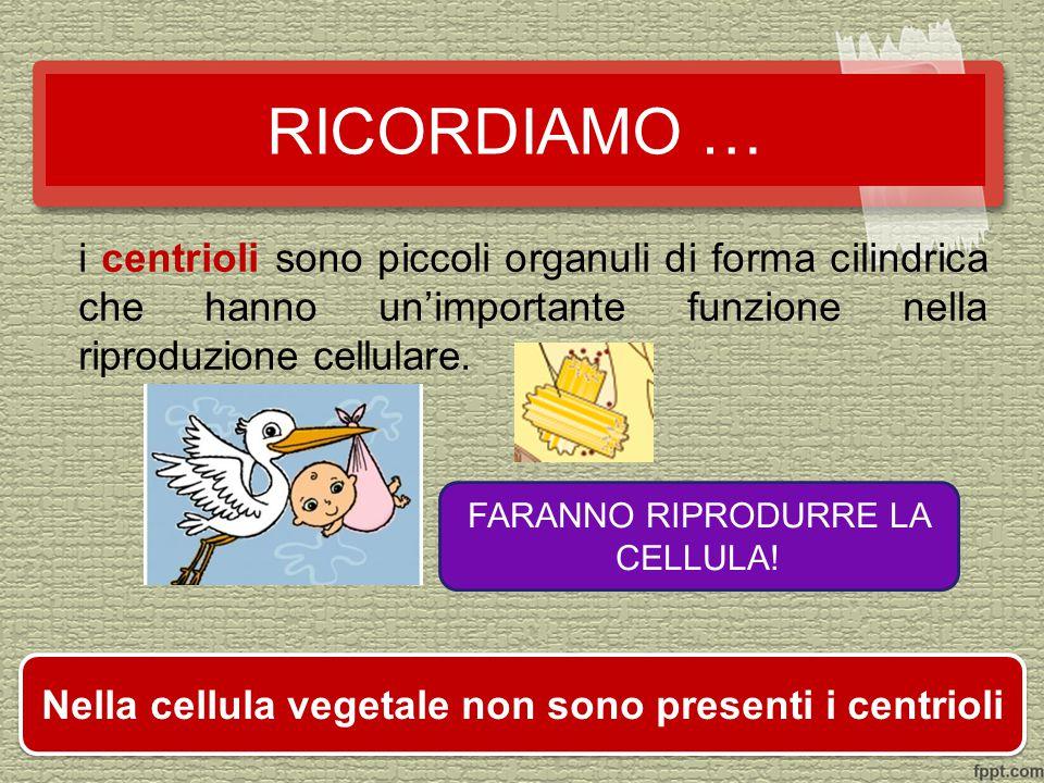 Nella cellula vegetale non sono presenti i centrioli