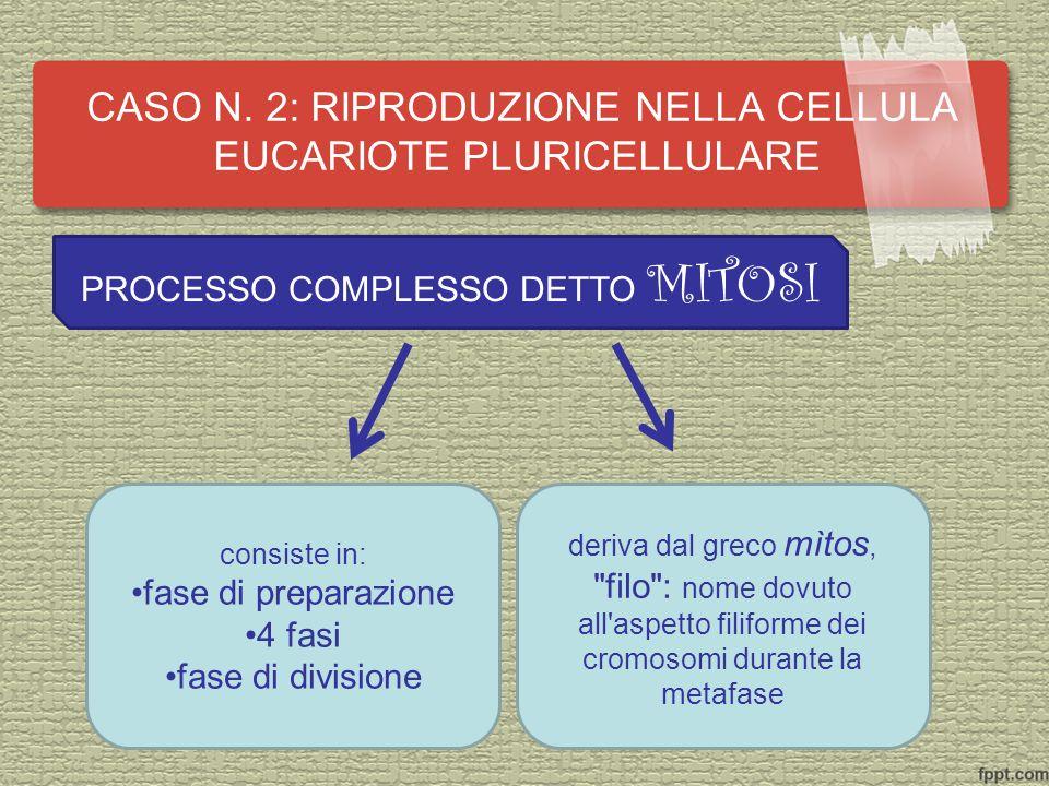 CASO N. 2: RIPRODUZIONE NELLA CELLULA EUCARIOTE PLURICELLULARE