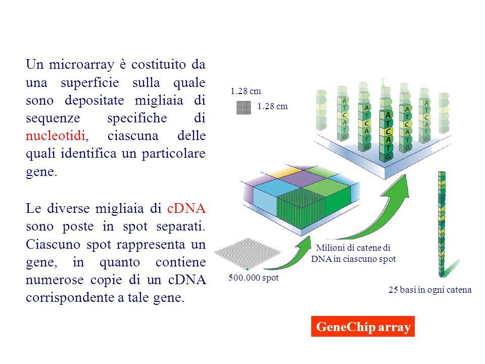 Milioni di catene di DNA in ciascuno spot