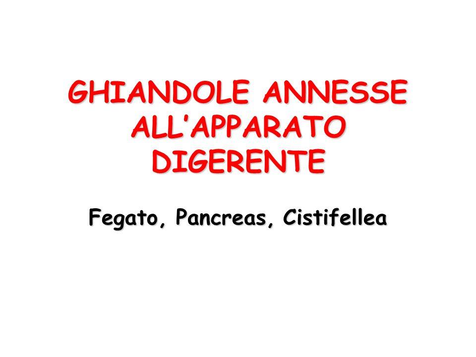 GHIANDOLE ANNESSE ALL'APPARATO DIGERENTE