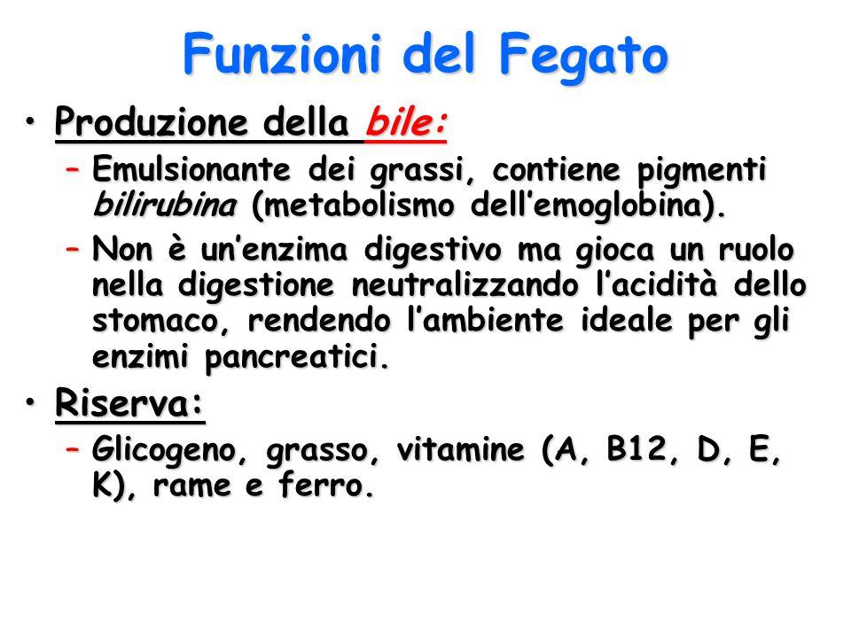 Funzioni del Fegato Produzione della bile: Riserva: