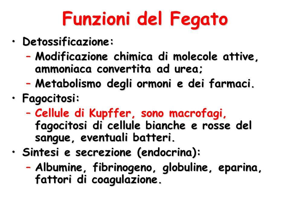 Funzioni del Fegato Detossificazione: