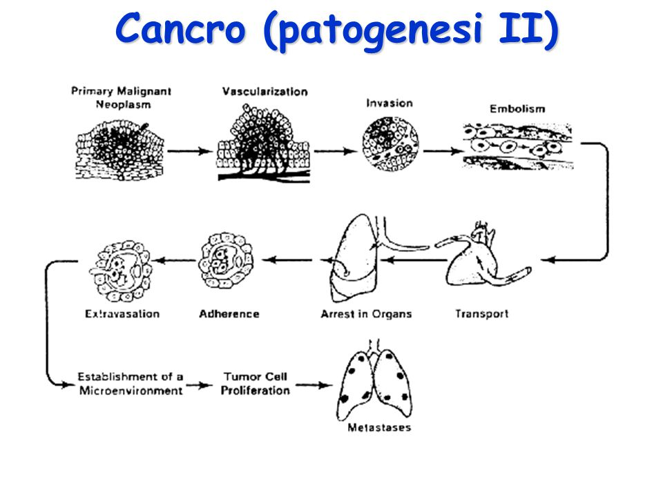 Cancro (patogenesi II)