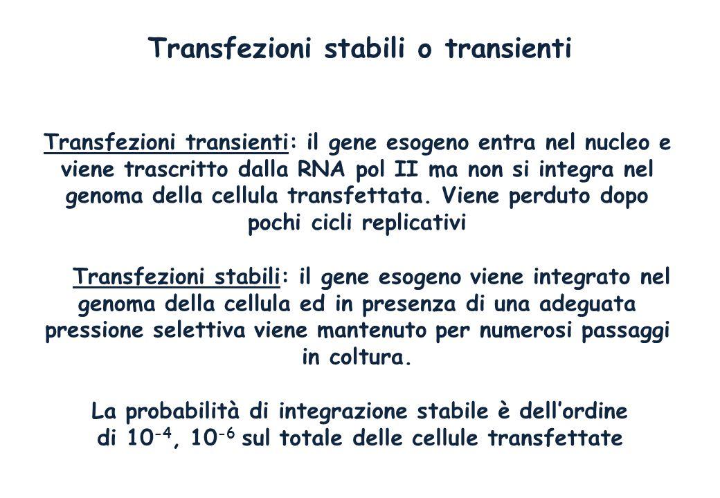 Transfezioni stabili o transienti