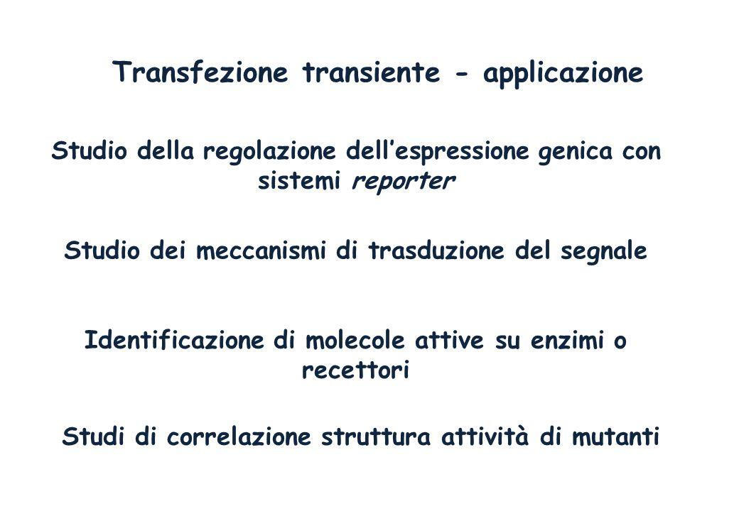 Transfezione transiente - applicazione