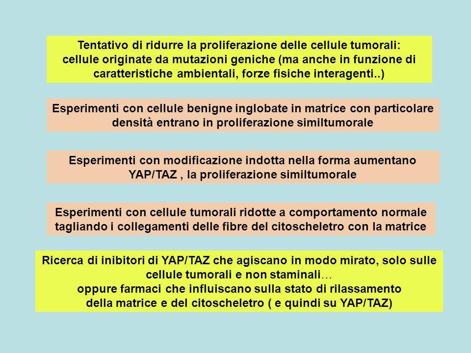 Tentativo di ridurre la proliferazione delle cellule tumorali: cellule originate da mutazioni geniche (ma anche in funzione di caratteristiche ambientali, forze fisiche interagenti..)