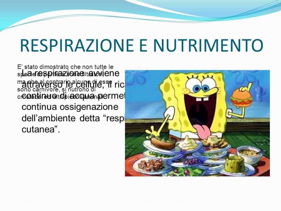 RESPIRAZIONE E NUTRIMENTO