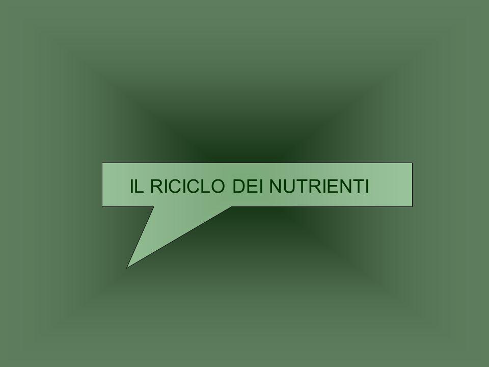 IL RICICLO DEI NUTRIENTI