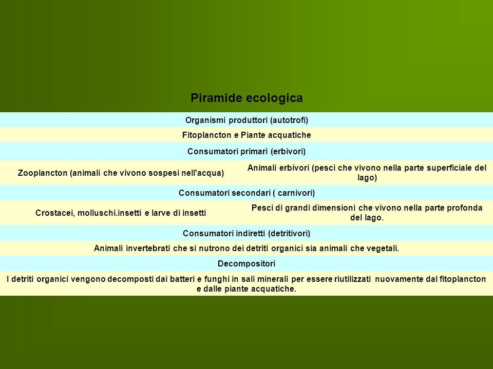 Piramide ecologica Organismi produttori (autotrofi)