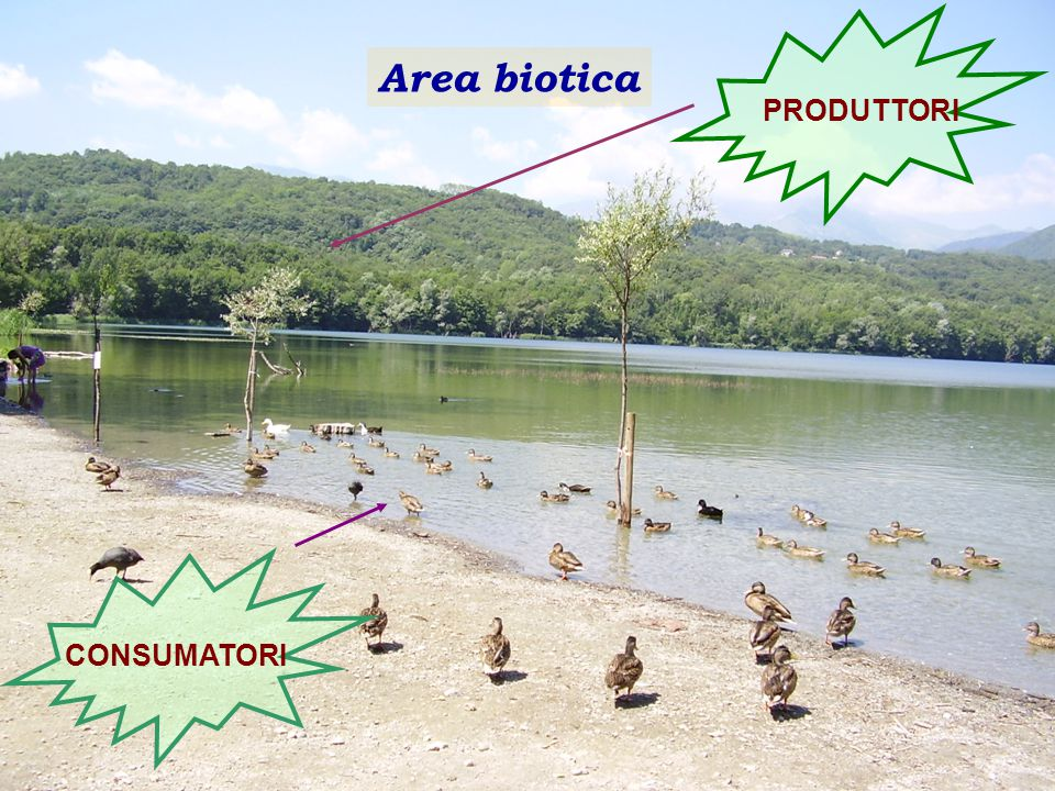 Area biotica PRODUTTORI CONSUMATORI