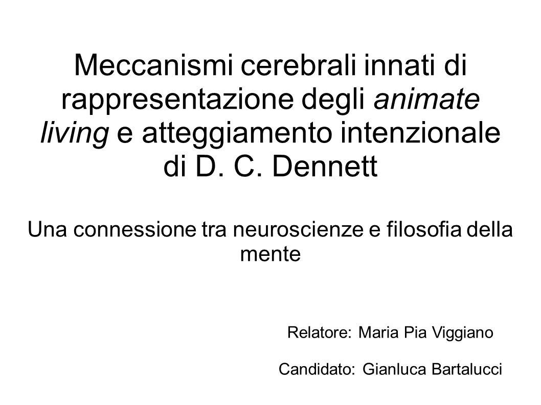 Meccanismi cerebrali innati di rappresentazione degli animate living e atteggiamento intenzionale di D. C. Dennett Una connessione tra neuroscienze e filosofia della mente