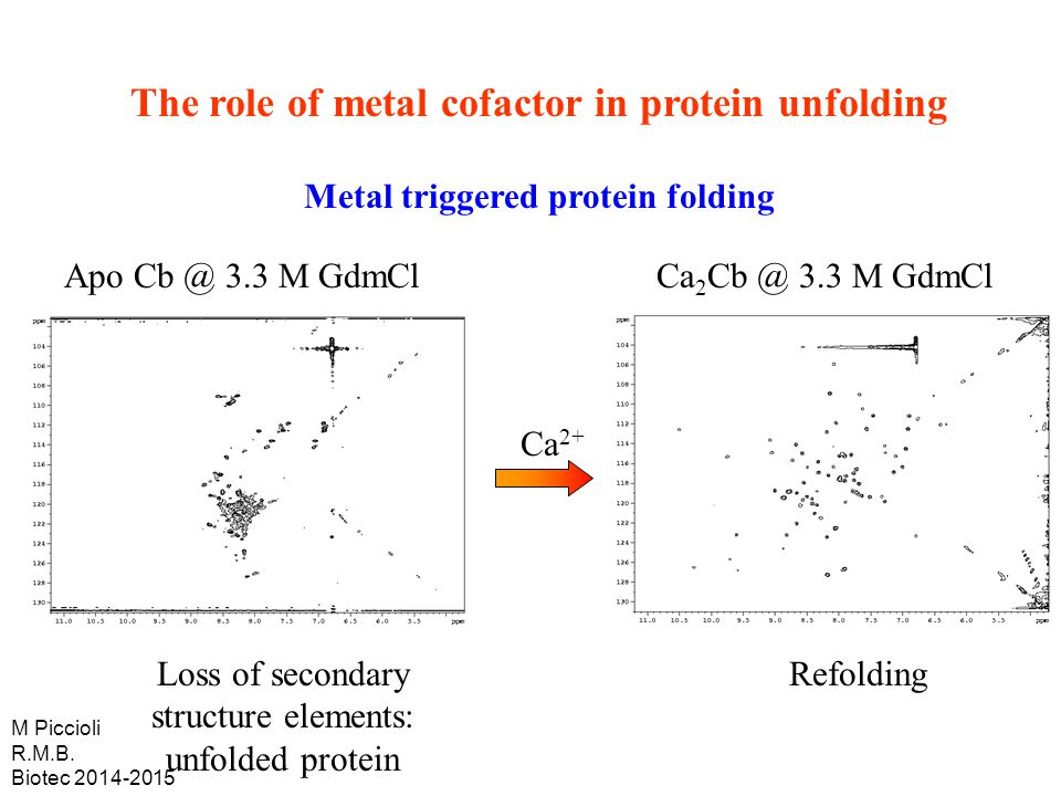 The role of metal cofactor in protein unfolding