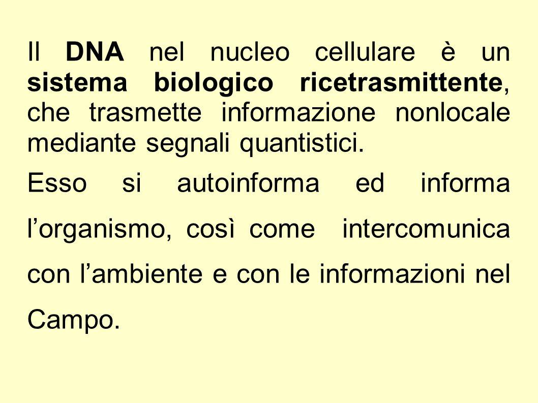 Il DNA nel nucleo cellulare è un sistema biologico ricetrasmittente, che trasmette informazione nonlocale mediante segnali quantistici.