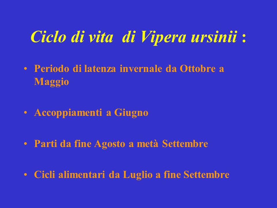 Ciclo di vita di Vipera ursinii :