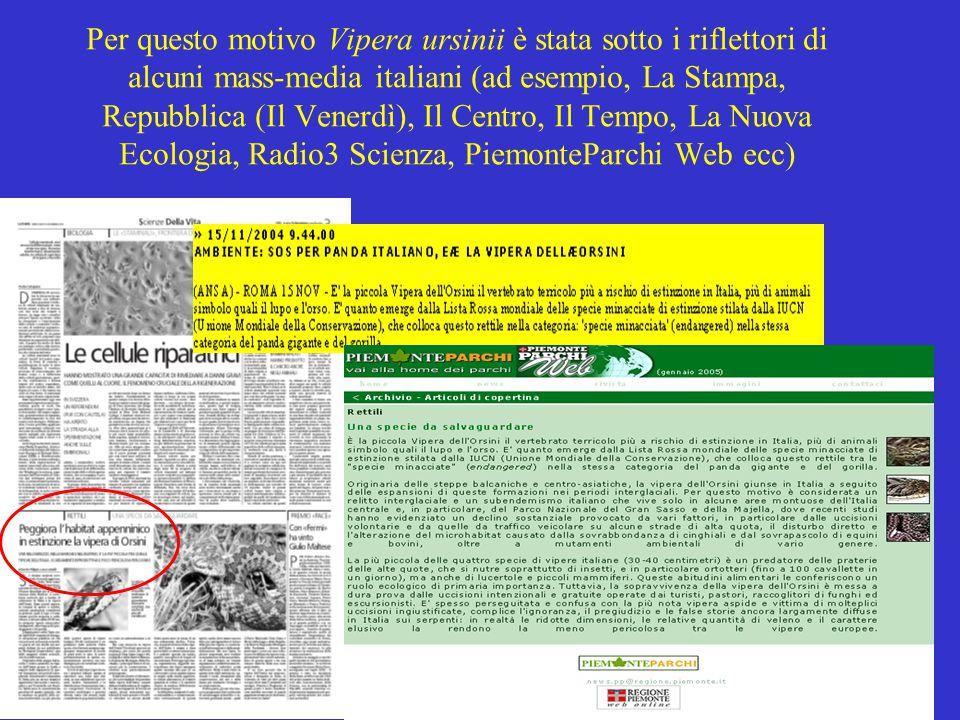 Per questo motivo Vipera ursinii è stata sotto i riflettori di alcuni mass-media italiani (ad esempio, La Stampa, Repubblica (Il Venerdì), Il Centro, Il Tempo, La Nuova Ecologia, Radio3 Scienza, PiemonteParchi Web ecc)