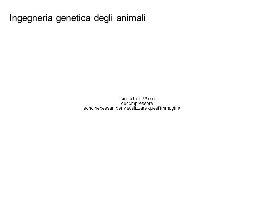 Ingegneria genetica degli animali