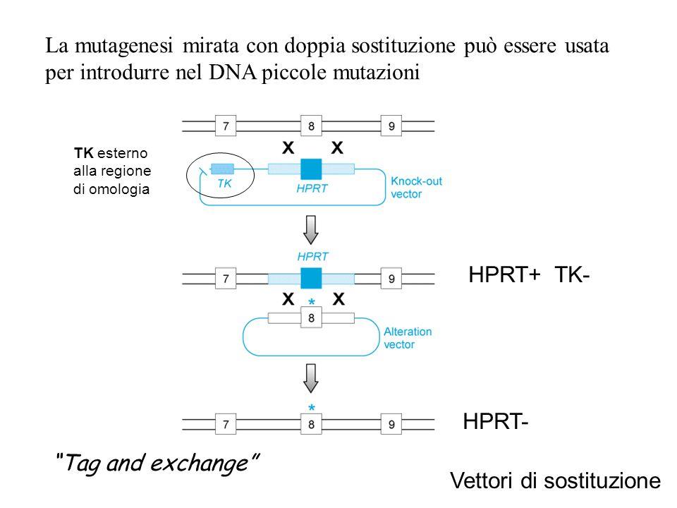 La mutagenesi mirata con doppia sostituzione può essere usata