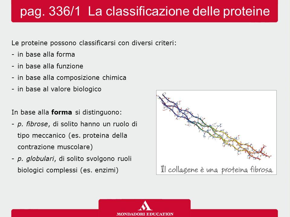 pag. 336/1 La classificazione delle proteine