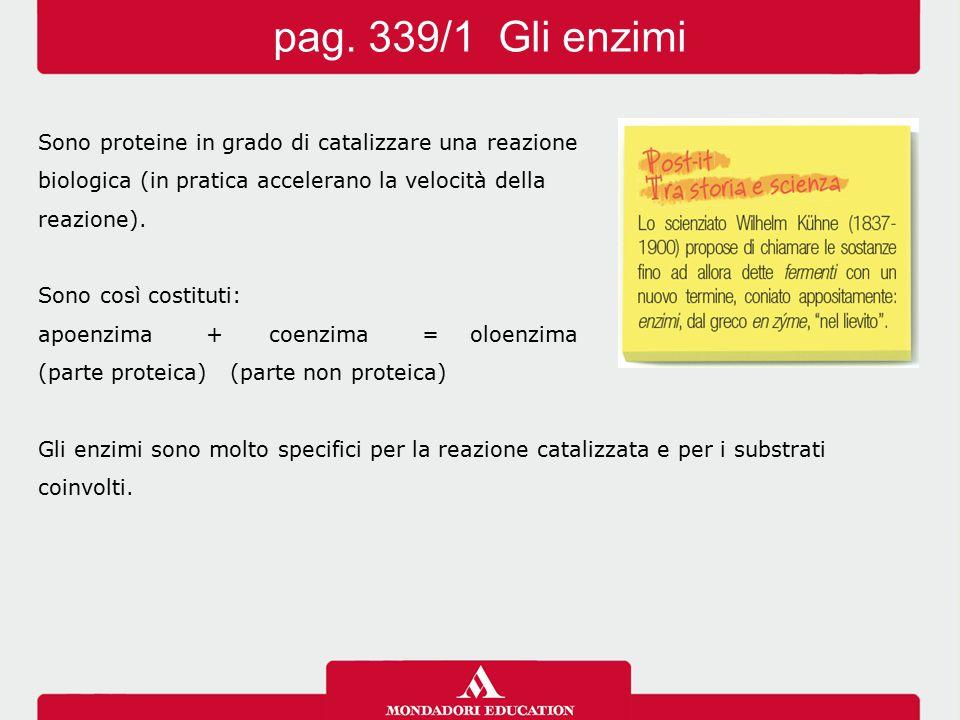 pag. 339/1 Gli enzimi Sono proteine in grado di catalizzare una reazione. biologica (in pratica accelerano la velocità della.