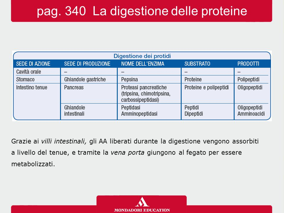 pag. 340 La digestione delle proteine