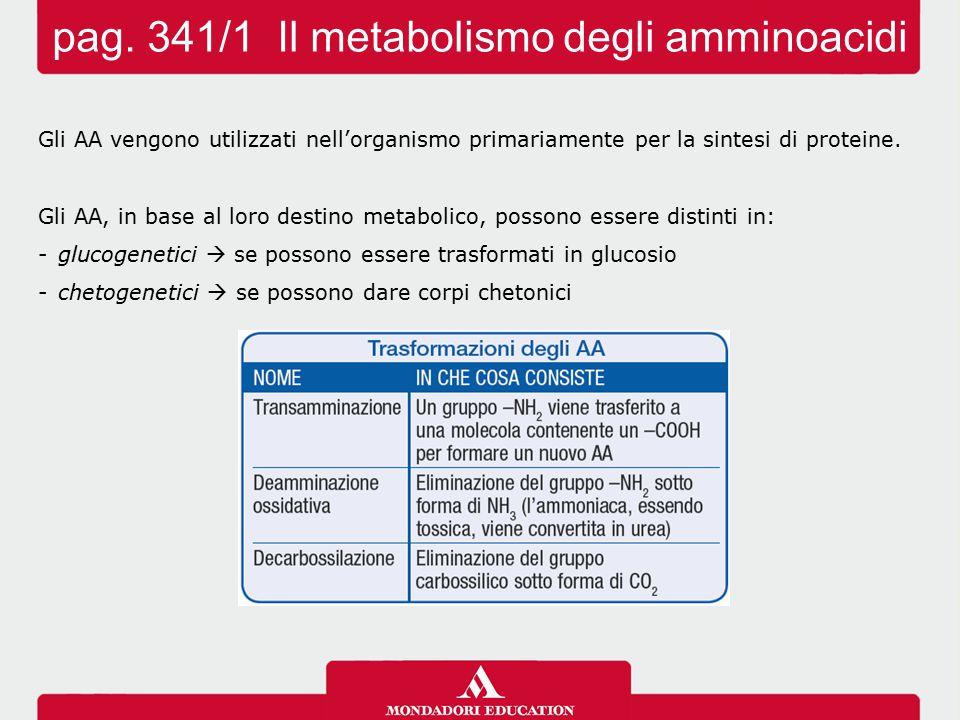 pag. 341/1 Il metabolismo degli amminoacidi