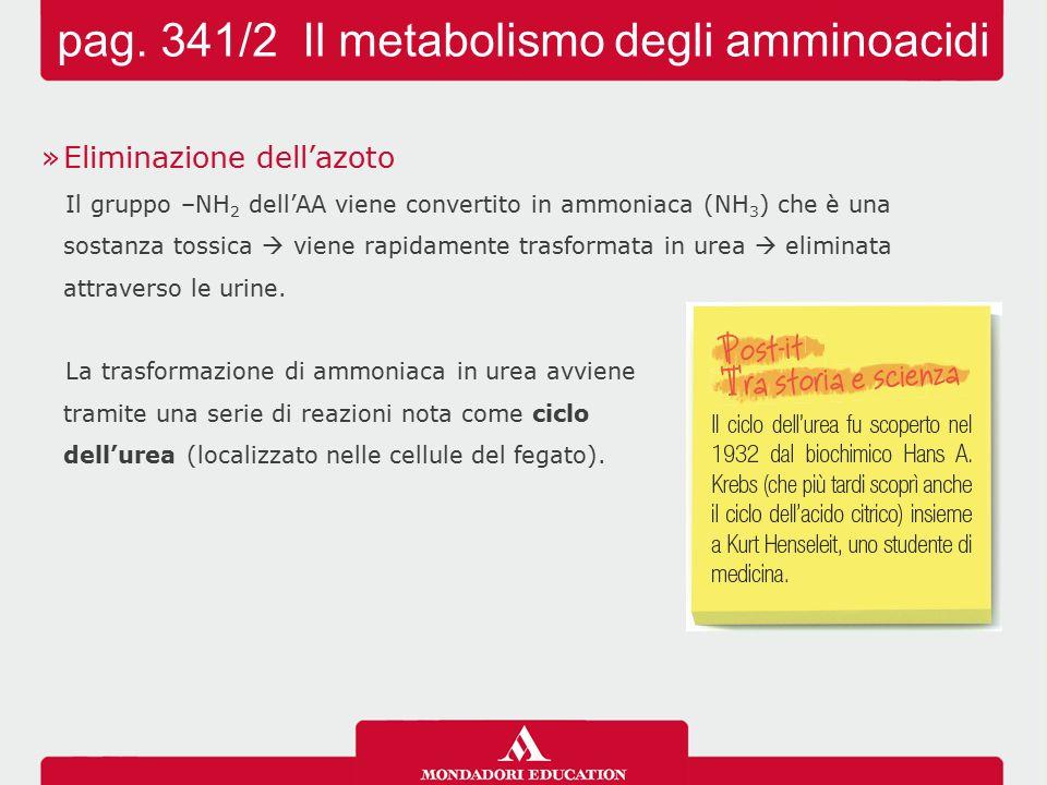 pag. 341/2 Il metabolismo degli amminoacidi