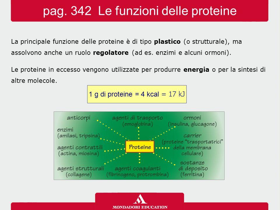 pag. 342 Le funzioni delle proteine