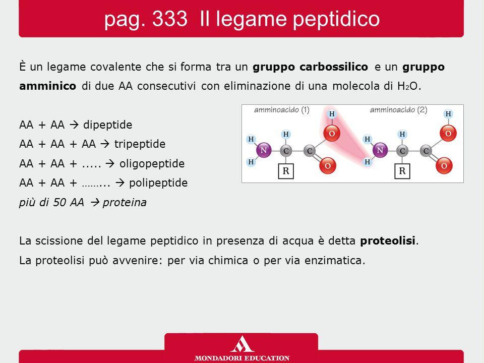 pag. 333 Il legame peptidico