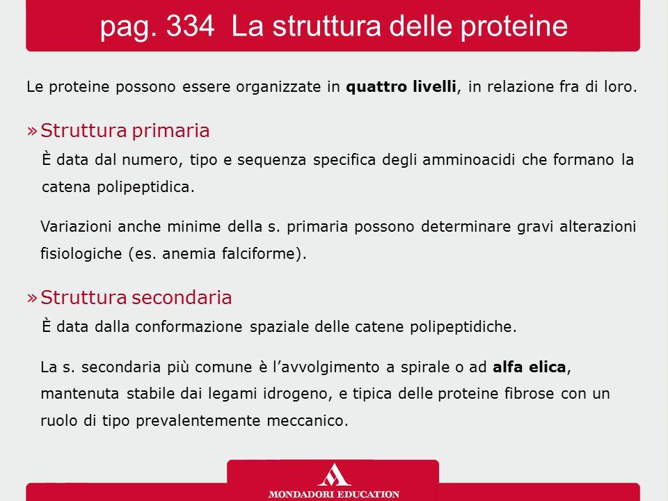 pag. 334 La struttura delle proteine