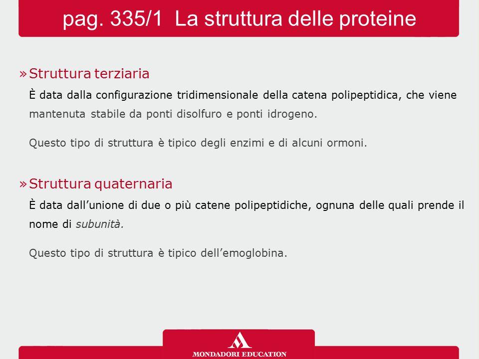 pag. 335/1 La struttura delle proteine