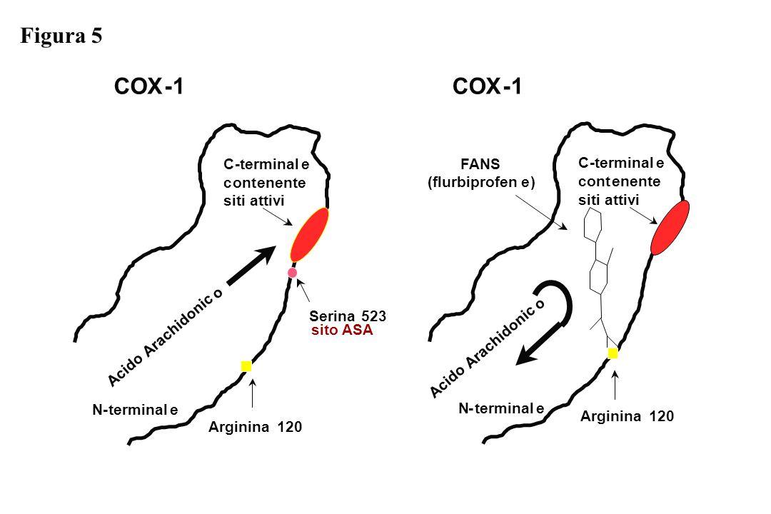 Figura 5 COX - 1 COX - 1 C - terminal e FANS C - terminal e c ont