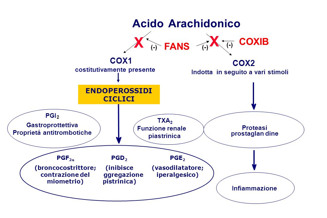 X X Acido Arachidonico COXIB FANS COX1 COX2 ENDOPEROSSIDI CICLICI (-)